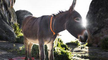 Weird Bible Stories: When Your Pet Talks Back
